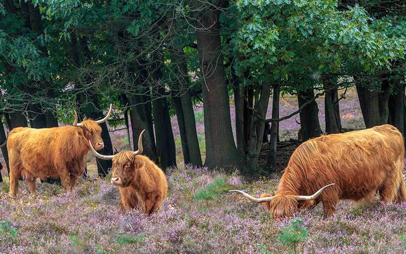 De-Hoge-Veluwe-National-Park
