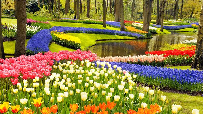 Keukenhof flower show